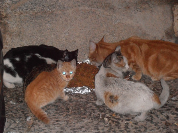 One of my neighbours leaves our a pile of food on a piece of aluminium foil. The ginger tom on the right is the male boss cat. The two cats in the centre are two of the many kittens he's produced with the female in the previous picture.