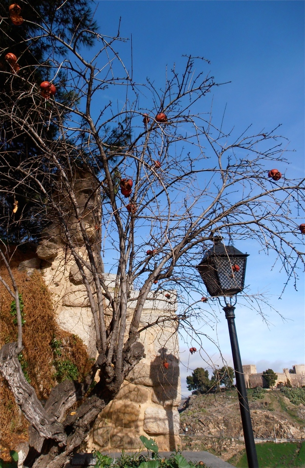 A denuded pomegranate tree with fruit