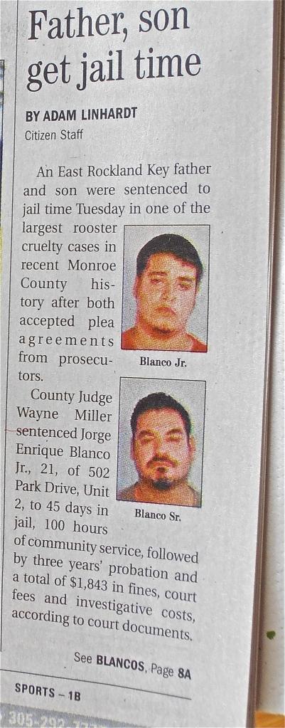Key West Rooster Crime