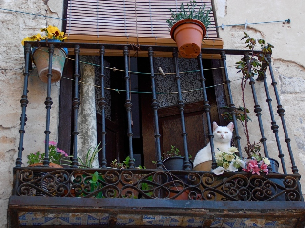 Toledo Window With Cat
