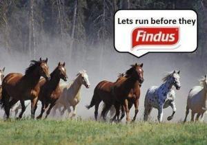 Findushorses