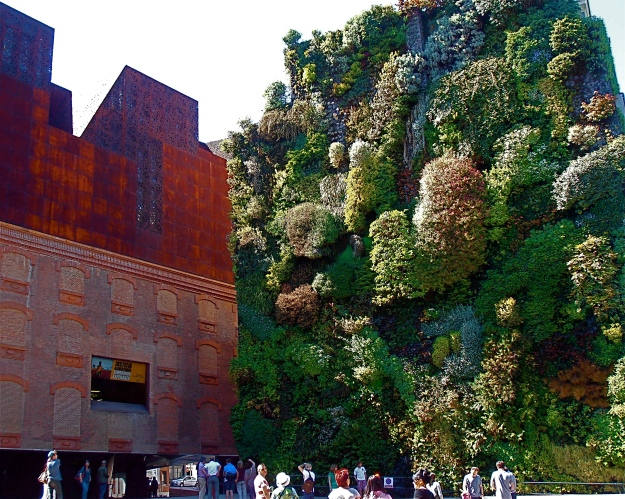 "This has nothing whatsoever to do with the Reina Sofía or Dalí. It's a ""vertical garden"", and really stunning close-up"