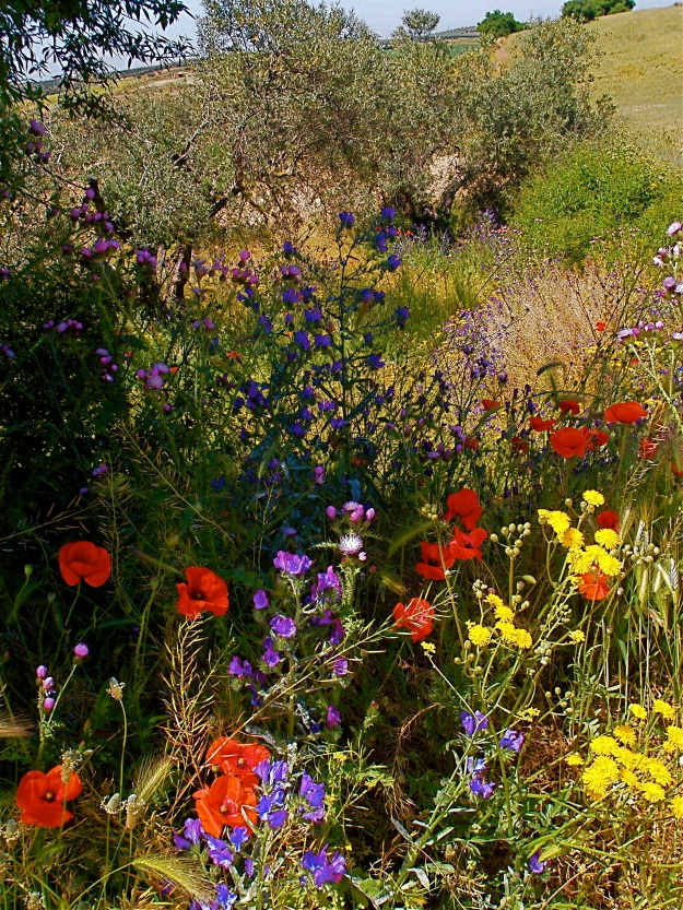 On the way up there, I snapped at some wildflowers yet again... I just find them totally irresistible!
