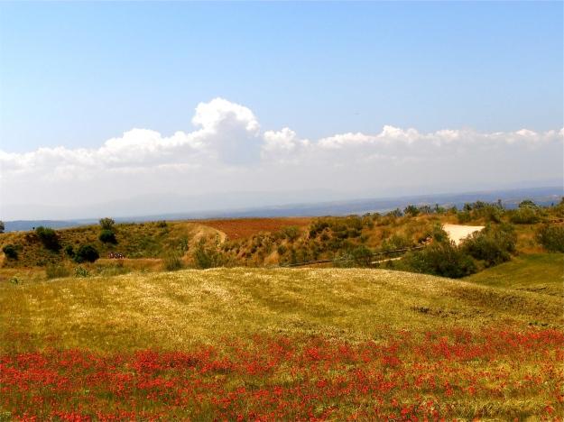 Barrancas Fields