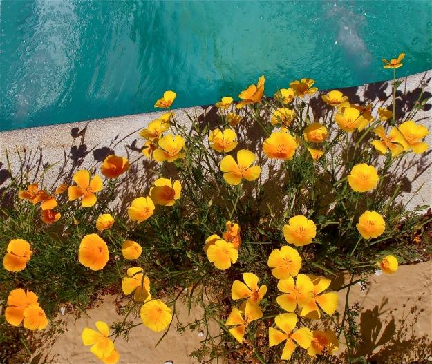 Garen flowers