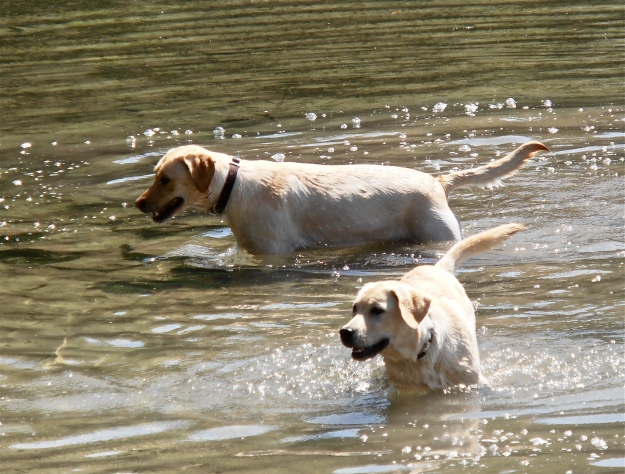 The dogs are having fun too :)