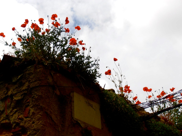 Poppies on a wall