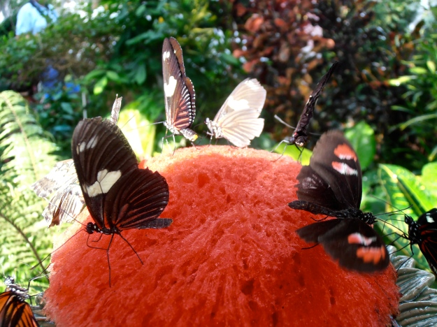 Butterflies on sponge feeder
