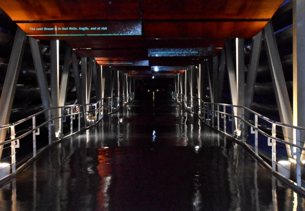 A walkway connecting two of the buildings of Lisbon Aquarium. Taken on a horrid, stormy, rainy day. You can see how wet the path is, despite being covered by a roof