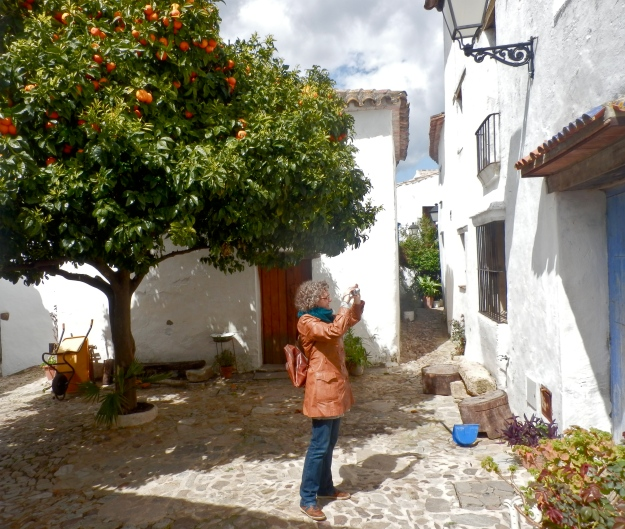 Castellar, Orange tree