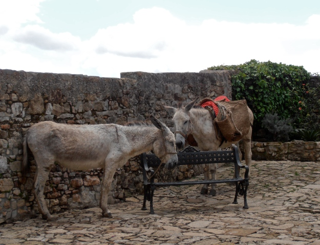 A very tired pair of donkeys