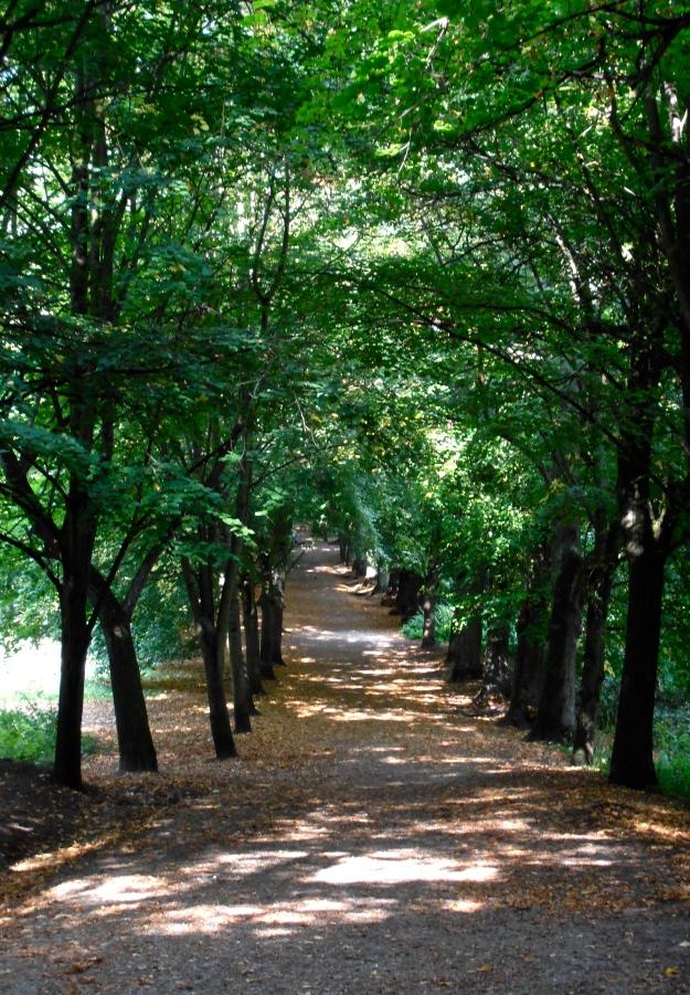Hampstead Heath Walk