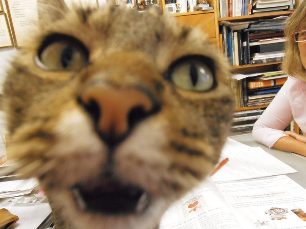 Otto close up