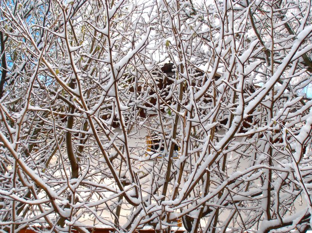 House behind snowy branches